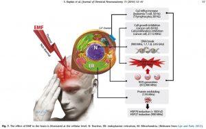 Schädigung des Gehrin durch elektromagnetische Feldern in verschiedenen Frequenzbereichen, die auf das Gehirn einwirken.